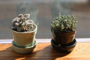 mini-potted-633702